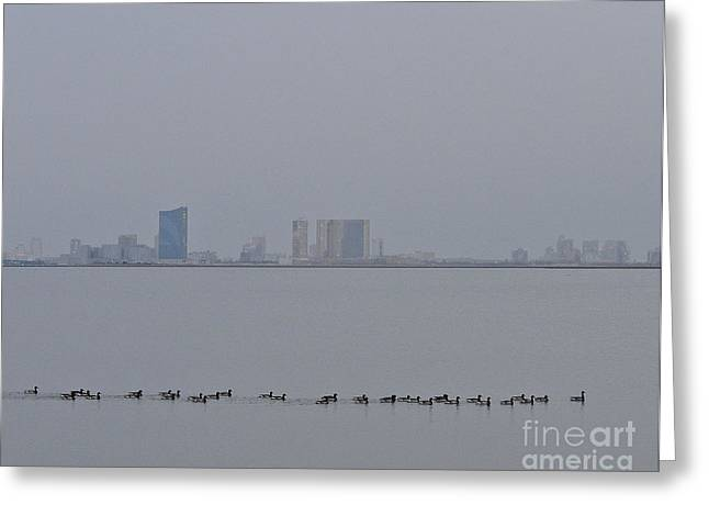 Foggy Ocean Greeting Cards - New Jersey Brant in Fog Greeting Card by Timothy Flanigan and Debbie Flanigan at Nature Exposure