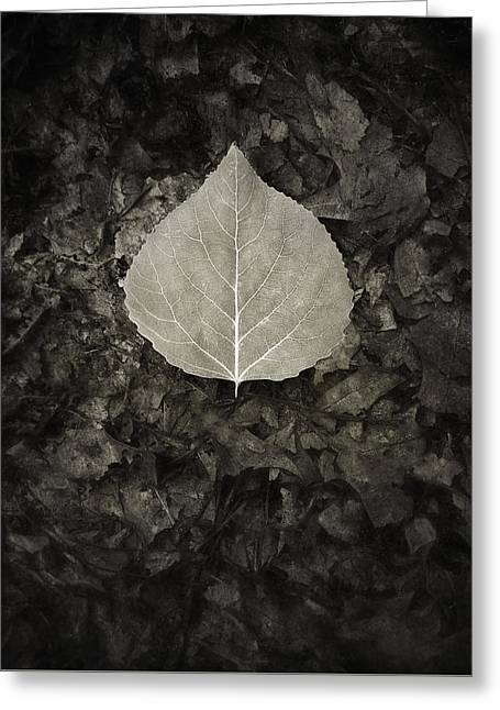 New Leaf On The Old Greeting Card by Scott Norris