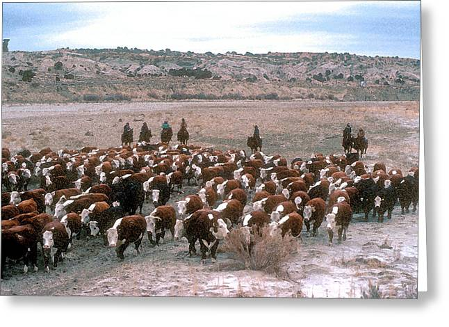 Cattle Drive Photographs Greeting Cards - New Mexico Cattle Drive Greeting Card by Jerry McElroy