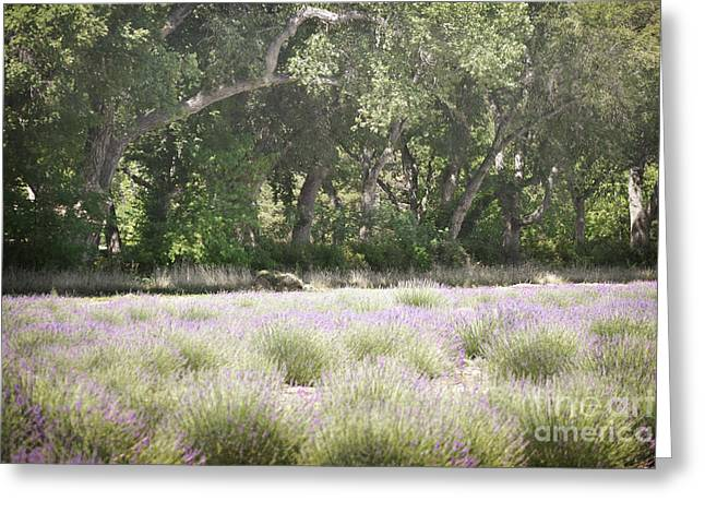 Print Photographs Greeting Cards - New Mexico Lavender Field Woodland Greeting Card by Andrea Hazel Ihlefeld