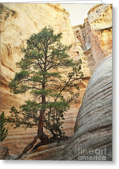 Tent Rocks Canyon Greeting Cards - New Mexico Tent Rocks Tree Greeting Card by Andrea Hazel Ihlefeld