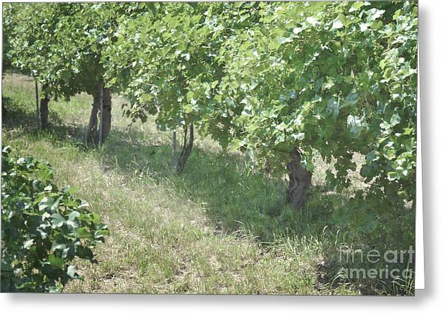 Print Photographs Greeting Cards - New Mexico Vineyard Trees Greeting Card by Andrea Hazel Ihlefeld