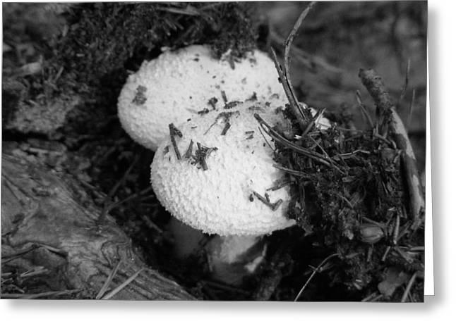 New Mushroom Greeting Card by D R TeesT