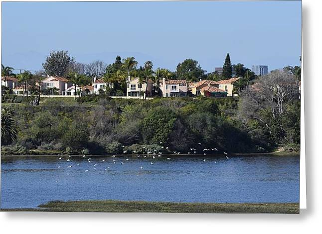 California Beaches Greeting Cards - Newport Estuary Looking Across at Homes I Greeting Card by Linda Brody