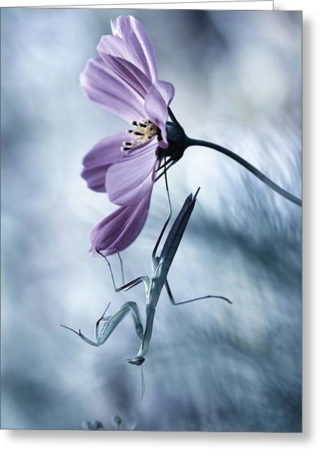 Mantises Greeting Cards - Newtonian Physics Greeting Card by Fabien Bravin