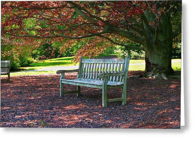 Park Benches Greeting Cards - Next Guest Greeting Card by Gordon Beck