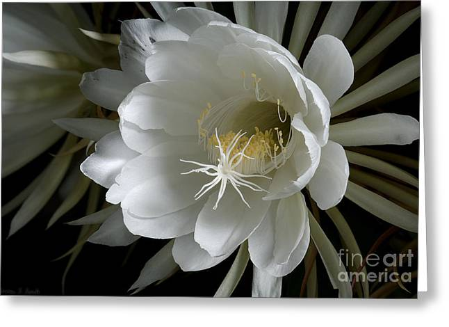 Night-blooming Cereus Deep 1 Greeting Card by Warren Sarle