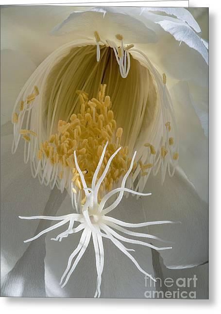 Cereus Greeting Cards - Night-Blooming Cereus Deep 8 Greeting Card by Warren Sarle