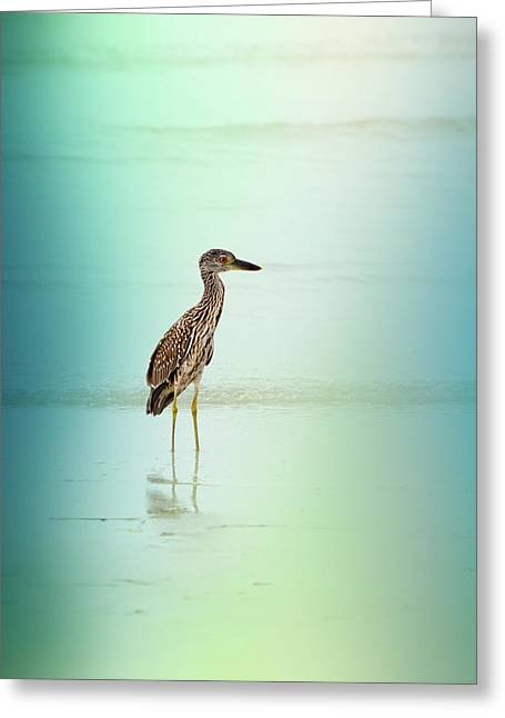 Juvenile Wall Decor Photographs Greeting Cards - Night Heron by Darrell Hutto Greeting Card by Darrell Hutto