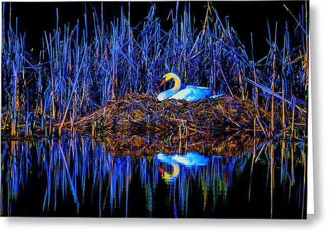 Caring Mother Greeting Cards - Night Nest Greeting Card by Brian Stevens