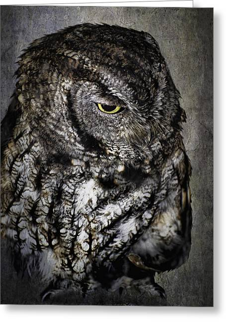 Diane Schuster Greeting Cards - Night Owl Greeting Card by Diane Schuster