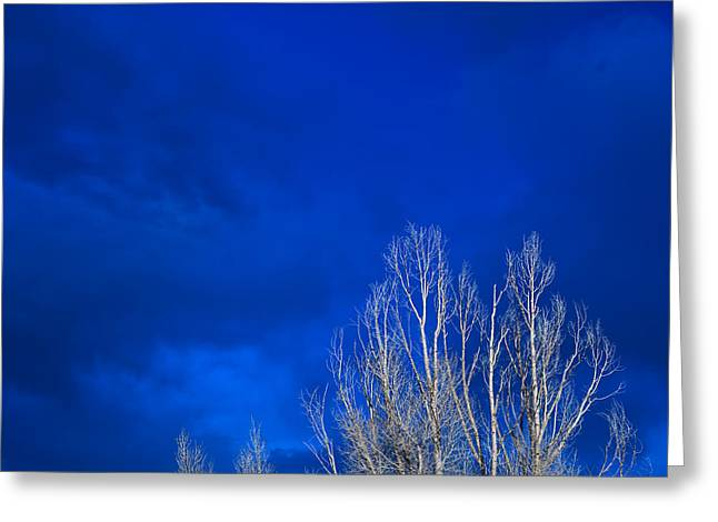 Night Sky Greeting Card by Steve Gadomski