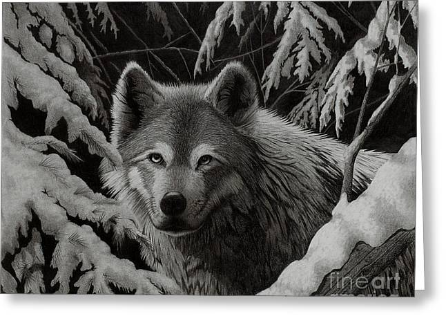 Snow Capped Drawings Greeting Cards - Night Wolf Greeting Card by Stephen McCall