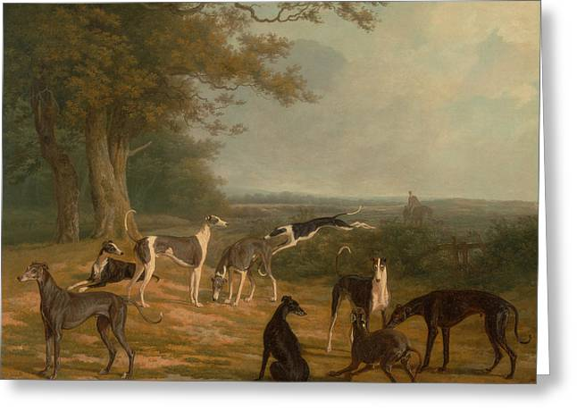 Greyhound Dog Greeting Cards - Nine Greyhounds in a Landscape Greeting Card by Celestial Images
