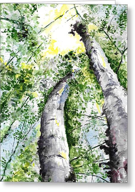 Nine Mile Birch Greeting Card by Andrew Claflin