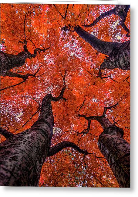 Nishinomiya Japanese Garden - Autumn Trees Greeting Card by Mark Kiver