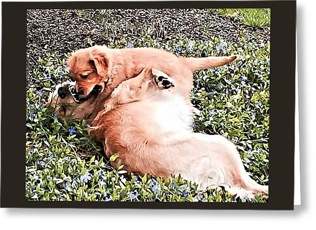 Puppies Photographs Greeting Cards - No Fear Greeting Card by John Feiser