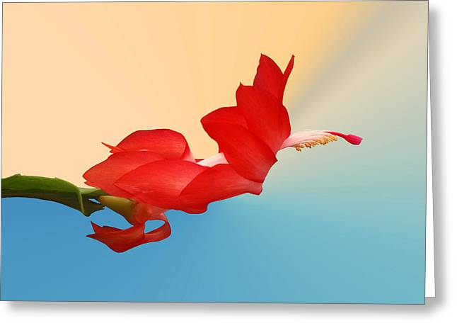 Christmas Cactus Greeting Cards - No Fear of Flying Greeting Card by Kristin Elmquist