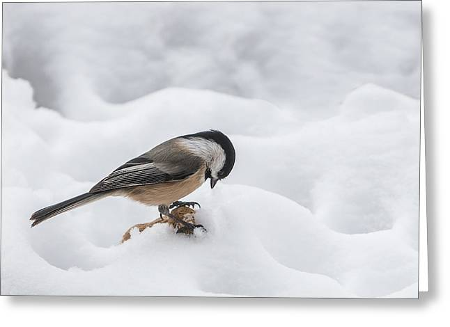 Snow Capped Greeting Cards - Chickadee Finds a Peanut Greeting Card by Patti Deters
