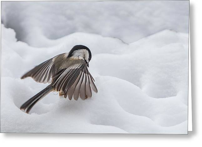 Snow Capped Greeting Cards - Chickadee - Wings at Work Greeting Card by Patti Deters