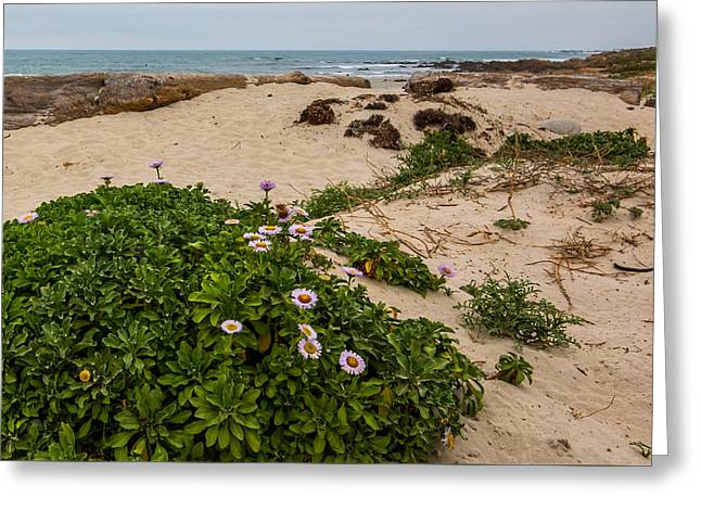 Sand Art Greeting Cards - Ice Plant Booms on Pebble Beach Greeting Card by Patti Deters
