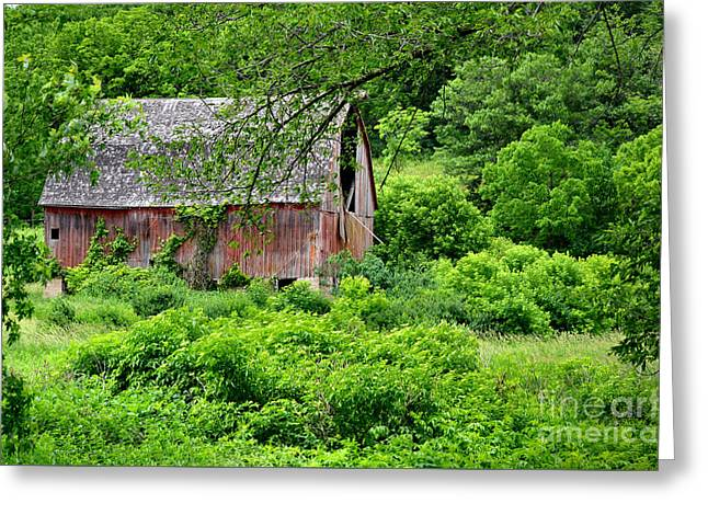 Barn Door Greeting Cards - No Longer Noble Greeting Card by Deb Halloran
