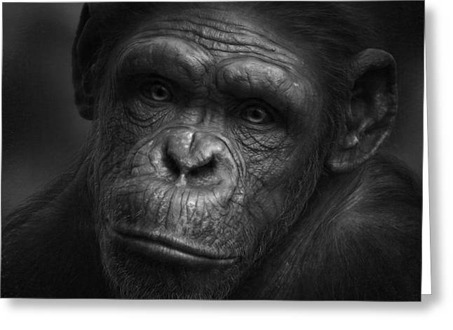 Apes Greeting Cards - No Words Greeting Card by Holger Droste