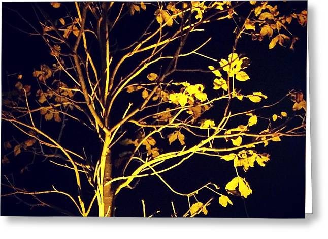 Nocturnal Tree Greeting Card by Contemporary Art