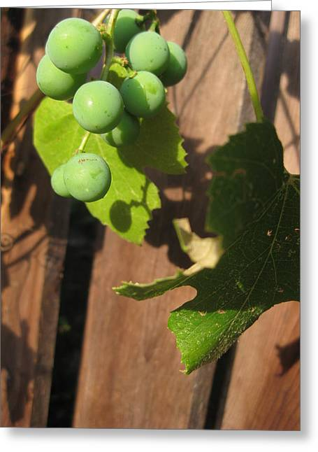 Grape Leaves Photographs Greeting Cards - Noir Greeting Card by John Conrad Johnson III