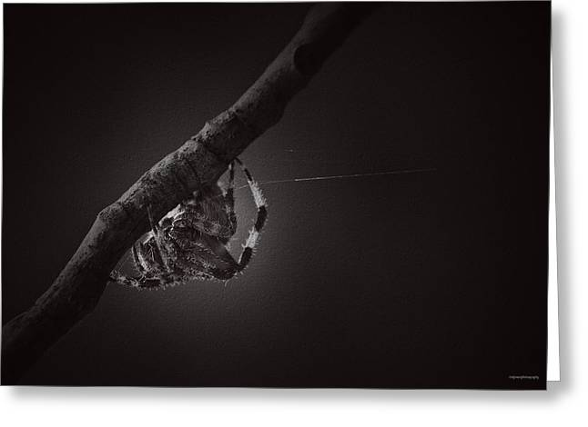Arachnids Greeting Cards - Noiseless Guest Greeting Card by Ron Jones