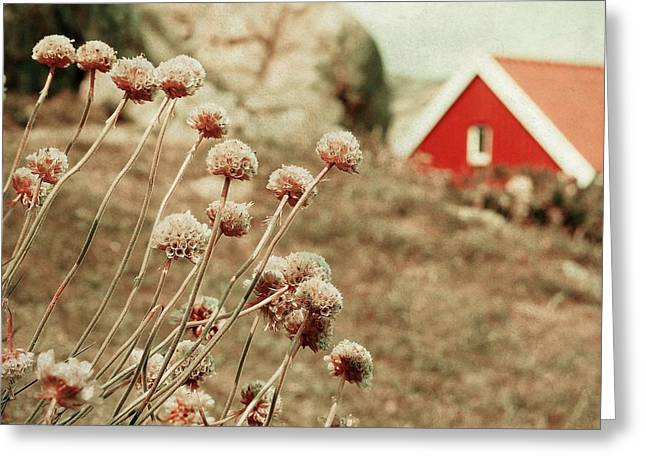 Norwegian Landscape Greeting Cards - Nordic summer Greeting Card by Sonya Kanelstrand