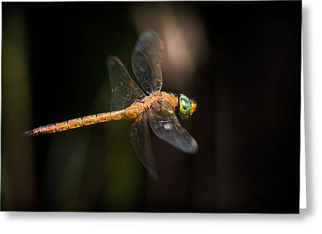 Norfolk Hawker Dragonfly Greeting Card by Ian Hufton