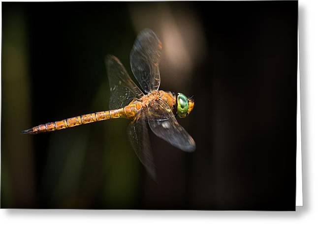 Dragonfly Macro Greeting Cards - Norfolk Hawker Dragonfly Greeting Card by Ian Hufton