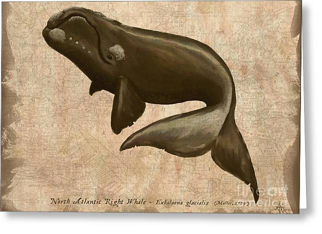 North Atlantic Right Whale Greeting Card by Amber Marine
