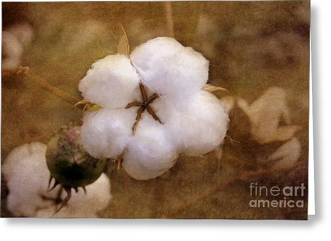 Cotton Balls Greeting Cards - North Carolina Cotton Boll Greeting Card by Benanne Stiens