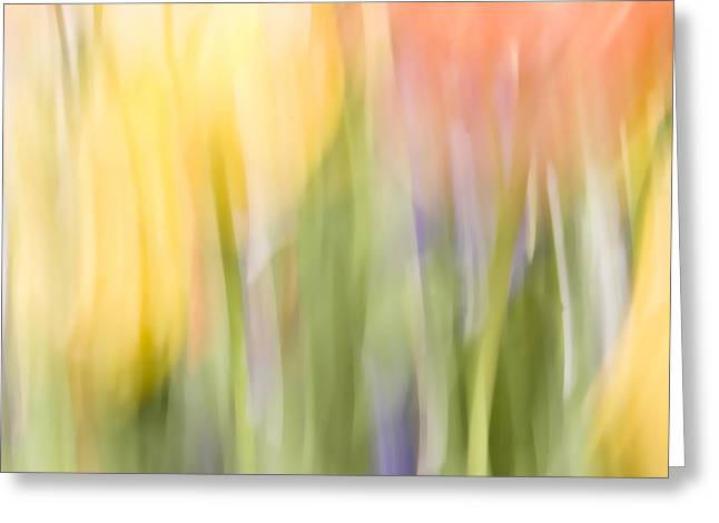 North Hills Tulips I Greeting Card by Margaret Denny