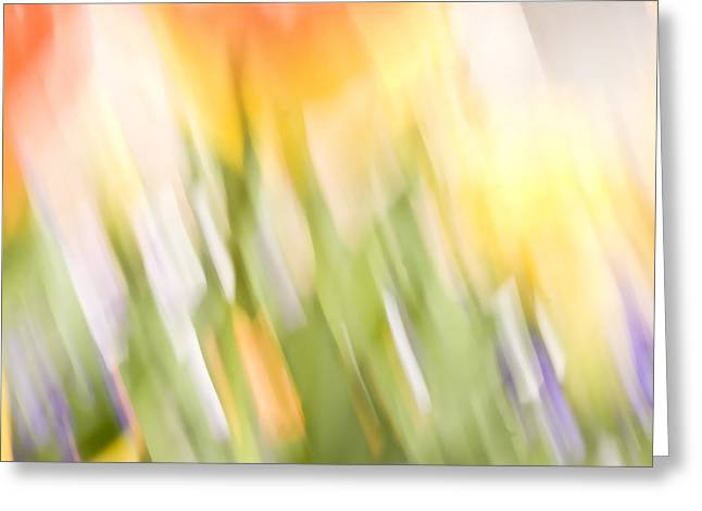 North Hills Tulips IIi Greeting Card by Margaret Denny