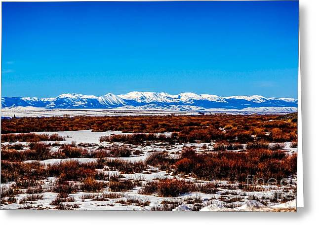 Rand Park Greeting Cards - North Park Greeting Card by Jon Burch Photography
