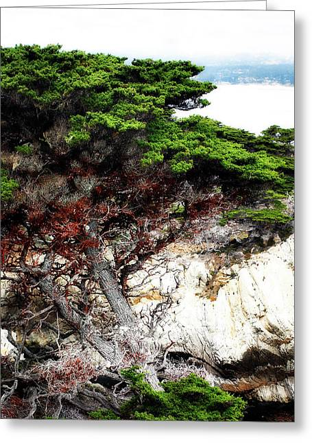 Point Lobos Greeting Cards - North Point Cypress 1 Greeting Card by Alan Hausenflock