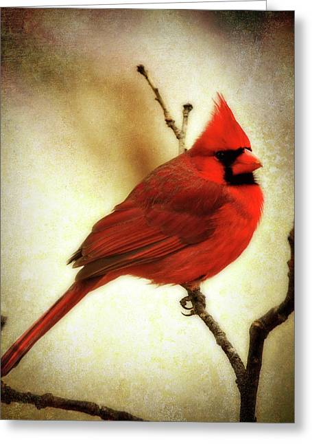 Backyard Greeting Cards - Northern Cardinal Greeting Card by Lana Trussell