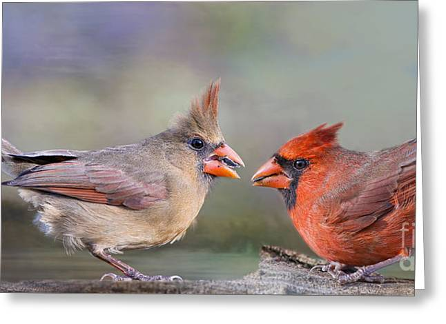 Female Northern Cardinal Greeting Cards - Northern Cardinal Mates for Life Greeting Card by Bonnie Barry