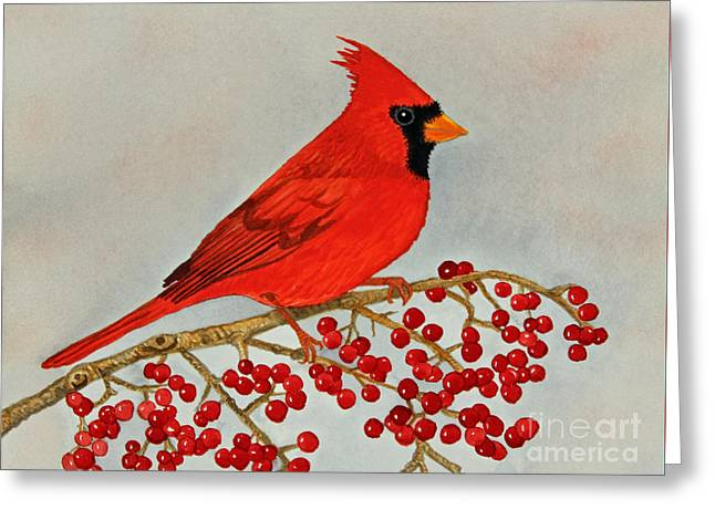 Northern Cardinal Greeting Card by Norma Appleton