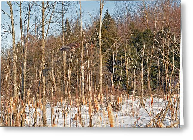 Saw Greeting Cards - Northern Forests Ghost In-flight Greeting Card by Asbed Iskedjian