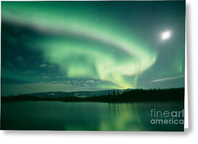 Night Sky Greeting Cards - Northern lights Greeting Card by David Nunuk