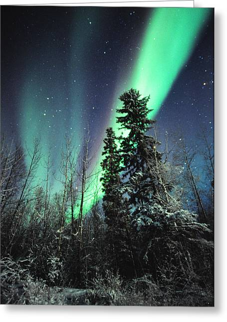 Brightness Greeting Cards - Northern Lights Over Fort Simpson Greeting Card by Robert Postma