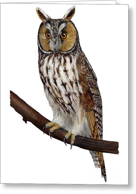 Northern Long-eared Owl Asio Otus - Hibou Moyen-duc - Buho Chico - Hornuggla - Nationalpark Eifel Greeting Card by Urft Valley Art