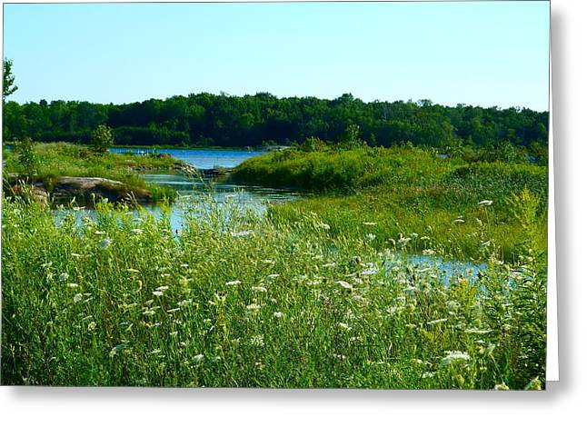 Claire Bull Greeting Cards - Northern Ontario 1 Greeting Card by Claire Bull