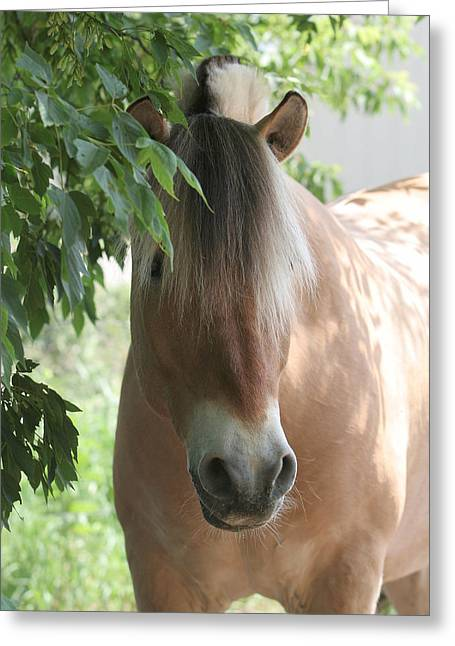 Grettings Greeting Cards - Norwegian Fjord Horse in the Shade Greeting Card by Laurie With