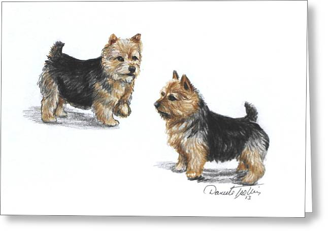 Painted Puppies Drawings Greeting Cards - Norwich Terrier breed Greeting Card by Daniele Trottier