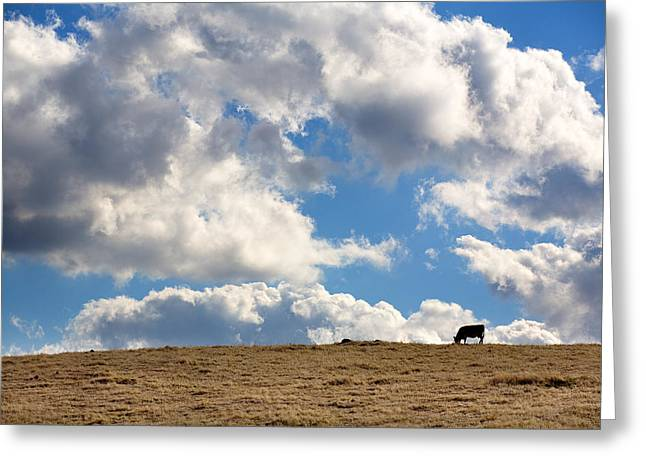 Big Sky Greeting Cards - Not a Cow in the Sky Greeting Card by Peter Tellone